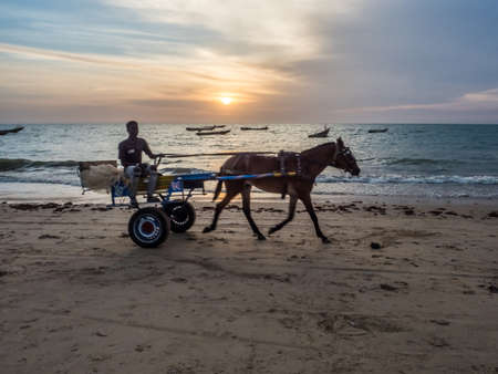 Senegal, Africa - January 24, 2019: Senegalese boy rides on a cart with white horse on the beach, a popular transportation way in Africa