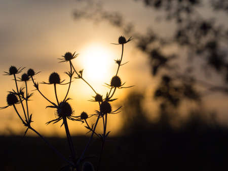 Silhouette of a flower on the background of an orange and blue sunset. Place for words or sentence.