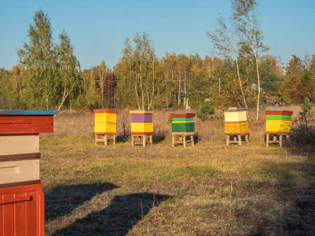 A row of vintage, wooden, handmade, colorful beehives in a field next to the forest. Poland in the autumn.