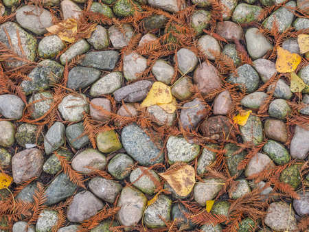 Background. Texture. Small stones covered with brown needles. Autumn. Warsaw. Poland