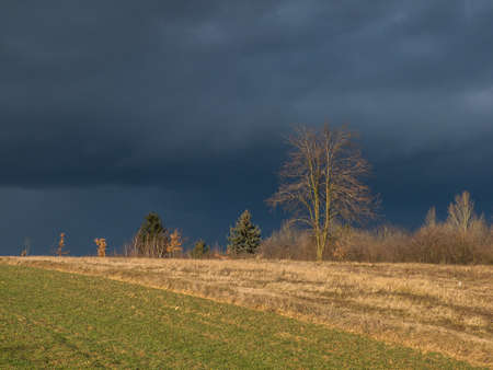 Meadow with lonely tree in winter. Pepper Mountains near Sandomierz during stormy weather. Poland. Eastern Europe. 免版税图像
