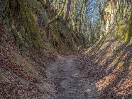 The loess gorge of the name of Queen Jadwiga, Sandomierz, Poland