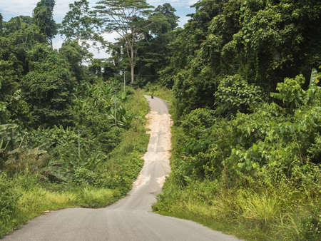 Narrow road in the middle of the indonesian jungle Bird's Head Peninsula, West Papua, Indonesia, Asia.