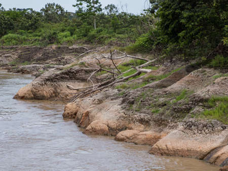 View of the green, jungle on the banks of the Amazon river during low water season., Green hell of Amazonia. South America.