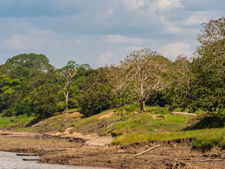 View of the green, jungle on the banks of the Amazon river during low water season., Green hell of Amazonia. South America. 免版税图像