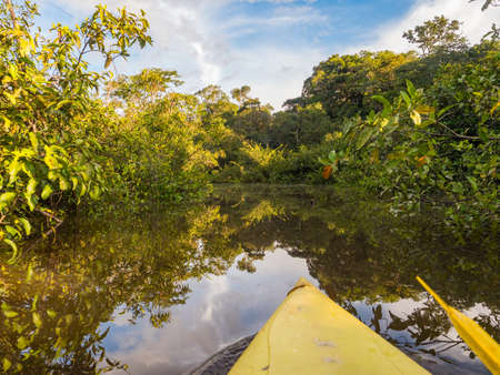 View from the kayak on the wall of green tropical forest in the Amazon jungle, green hell of the Amazon. Selva on the border of Brazil and Peru. Amazon basin in the high water season, South America.