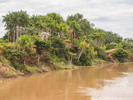 View of the green, jungle on the banks of the Amazon, Green hell of Amazonia. Selva on the border of Brazil and Peru. South America.