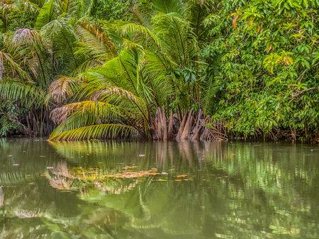 Tropical forest around Arguni Bay, Bird's Head Peninsula, West Papua, Indonesia, Asia. 免版税图像