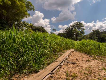 Wooden path on the bank of Javari River, the tributary of the Amazon River during low water season. Selva on the border of Brazil and Peru. Amazonia. South America.