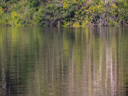 Background. Reflection of the wall of a green rainforest in a lagoon in the Amazon rainforest, the green hell of the Amazon. Selva on the border of Brazil and Peru. South America. Stok Fotoğraf