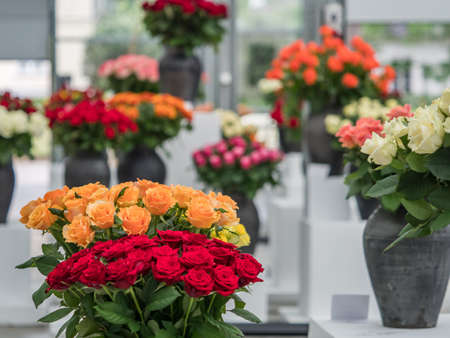 Warsaw, Poland - June 01, 2019: Beautiful, romantic roses in black clay vases during the exhibition of roses in Poland. Royal Bath exhibition. Eastern Europe.