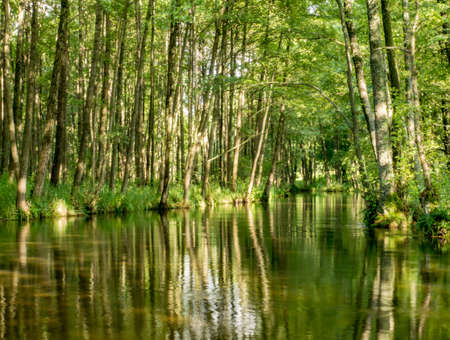 Trees and clouds reflecting in a water. Wda river during the canoeing trip, Bory Tucholskie, Poland.