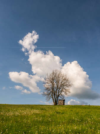 View of a lonely tree in a meadow in a small Polish village in the Tatra Mountains with a view of the snow-capped mountains during the sunny weather with beautiful white clouds on the sky