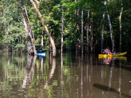 Jangle, Brazil - May 8, 2016: Kayaking between the treetops in the flooded jungle, Amazonia, South America Editöryel