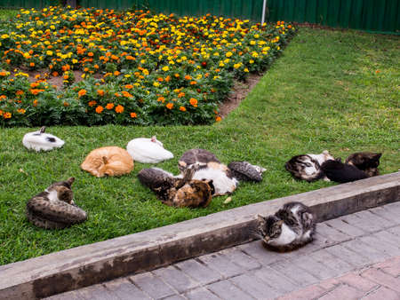 Cats and flowers at Kennedy Park (The Cat's Park) in Miraflores District - Lima, Peru