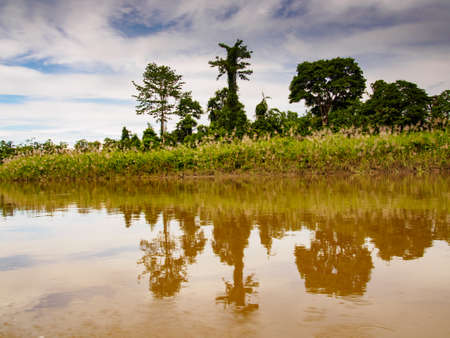 View of the Jungle on the bank of Brazza River, West Papua, Indonesia, Asia
