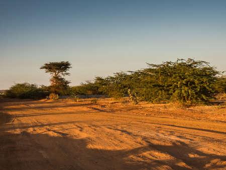 Africa's red dirt road. Senegal, Africa 免版税图像