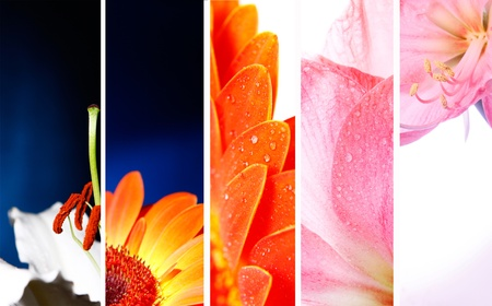 collection of flower banner  macro photo