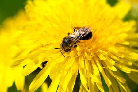 macro of insect photo