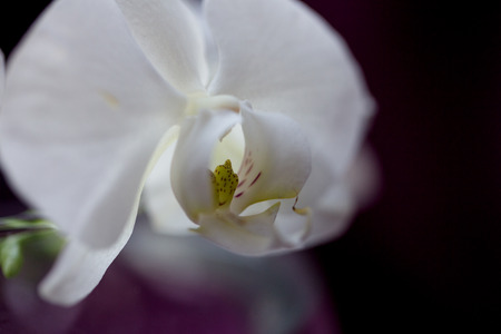 white flower orchid Stock Photo