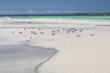 waders: Las gaviotas o gaviotas son aves de la familia Laridae de la sub-orden de Lari. Ellos est�n m�s estrechamente relacionadas con los charranes y s�lo alejadas a auks, desnatadoras, y m�s lejanamente con las aves zancudas. Foto de archivo