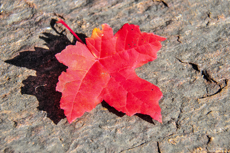 Een herfstblad