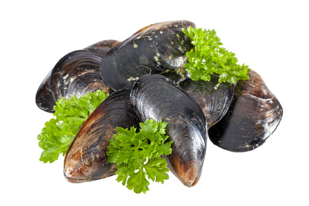 mussels isolated Imagens