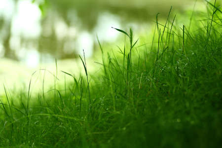 shallow depth of field: Blades of grass Stock Photo