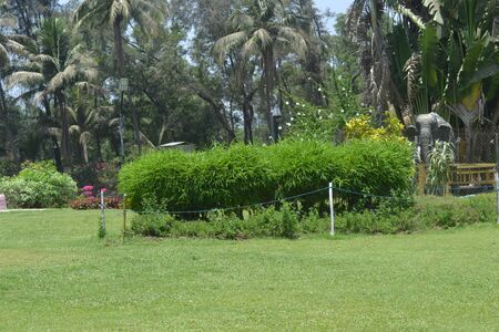 Garden In The Gujarat. Image For Sell