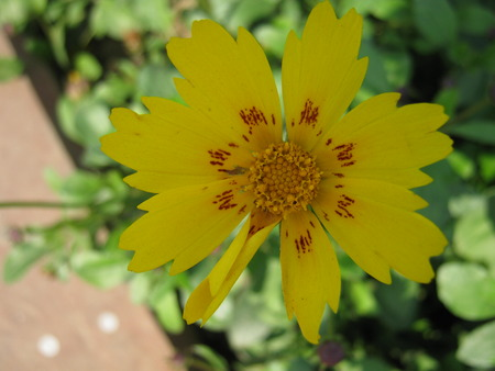 unedited: The yellow flower.. Stock Photo