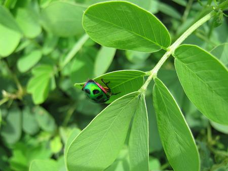 unedited: Green Nature...