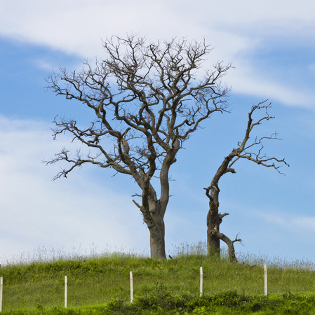 bare wire: Old Tree