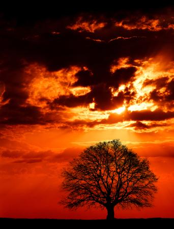 夕暮れ時の巨大な樫の木の写真。