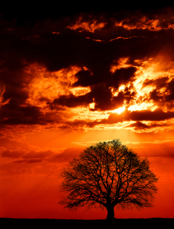 Photo of giant oak tree at sunset.