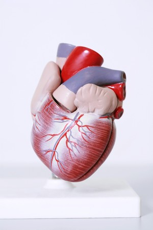 Medical heart model Stock Photo