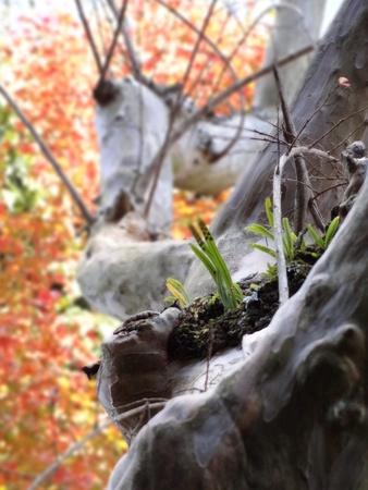 trunk  tree: Primer plano de tronco de �rbol Foto de archivo