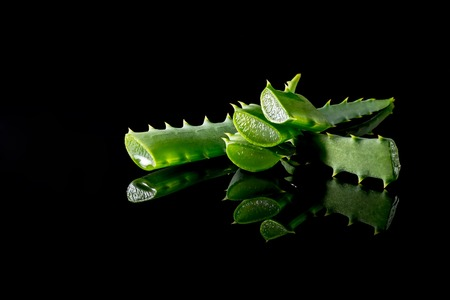 Aloe plant green slice with reflection close-up macro isolated on a black background