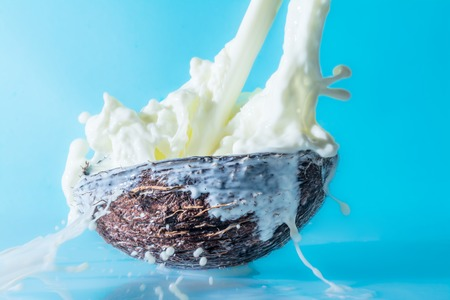 Coconut with milk splash on a blue background, splashing milk in coconut