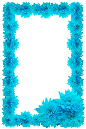 frame of blue chrysanthemums isolated on a white background