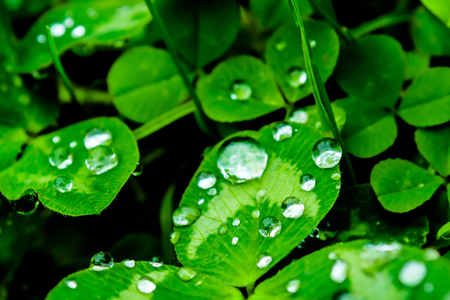 Rain drops on a green leaf close-up. Drops of water on a green plant macro. Dew on the green grass in nature. Reklamní fotografie - 85904990
