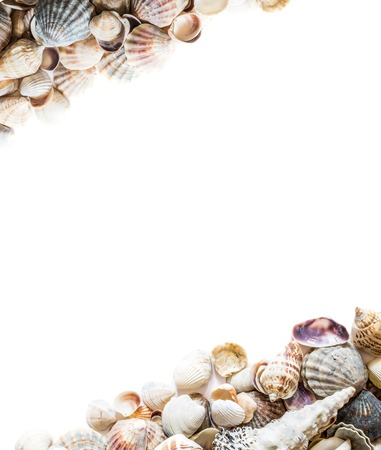 Background with different seashells on the sides and isolated in the center of white space for text. Large photo. Imagens