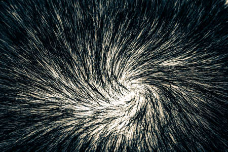 The texture of the hair on the human head. Macro The crown of the head of a man with beautiful hair twisted into a spiral.