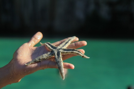 starfish,  south of thailand Stock Photo - 16193580