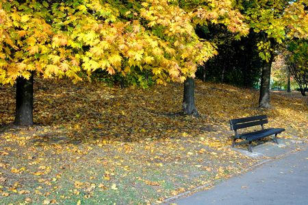 bench alone: park in the sunny autumn day, conceptual issues