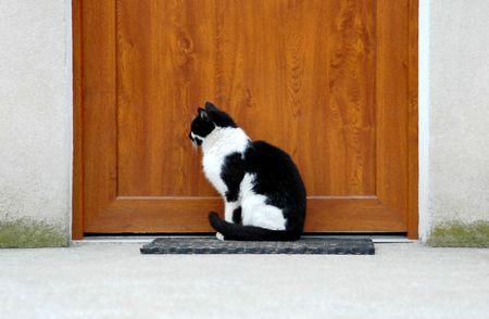 composure: Figa gatto di attesa, di amicizia, di fede, di sicurezza, questioni concettuali