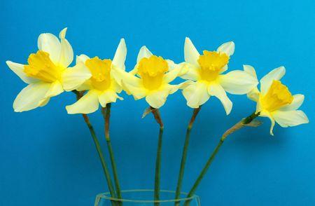 Spring flowers, Easter, decoration, house, illustration illustration
