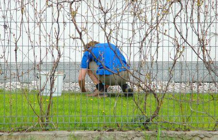 paciencia: Trabajo en el jard�n, la primavera, los jardines urbanos, la paciencia, la paz, barrio, trabajo sucio, concepto