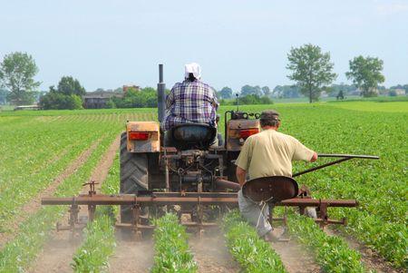 Los agricultores de trabajo, el cultivo de la tierra, cuestiones agrícolas  Foto de archivo - 1064460
