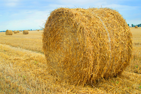 modernization: Field with straw bales, agriculture, concept  Stock Photo
