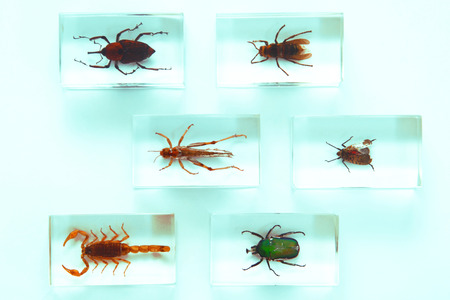 science is exciting: Collection of insects, fear, phobia, hobby, concept